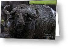 Mud Sculpture-signed Greeting Card