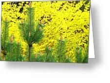 Mugo Pine And Forsythia Greeting Card