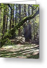 Muir Wood Greeting Card