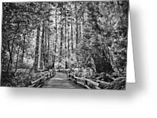 Muir Woods Bw Greeting Card