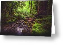 Muir Woods No. 3 Greeting Card