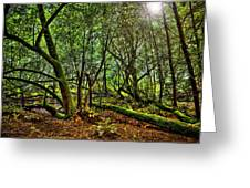 Muir Woods Rejuvenation Greeting Card