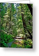 Muir Woods Study 22 Greeting Card