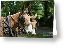 Mule 5 Greeting Card