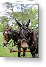 Mule Days 2 Greeting Card