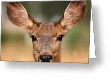 Mule Deer Being Playful Greeting Card