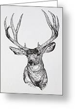 Mule Deer Buck Greeting Card by Lana Tyler