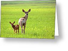 Mule Deer Doe And Fawn Looking Back Over Their Shoulders Greeting Card