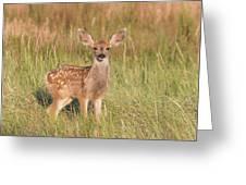 Mule Deer Fawn Is All Ears Greeting Card