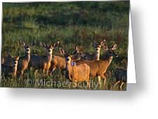 Mule Deer In Velvet 04 Greeting Card
