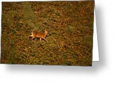 Mule Deer - Mattole Beach Greeting Card