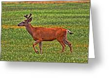 Mule Deer On The Sante Fe Trail Greeting Card
