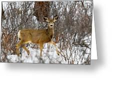 Mule Deer Portrait In Heavy Snow Greeting Card