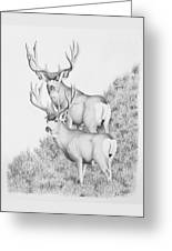 Mule Deer Study Greeting Card