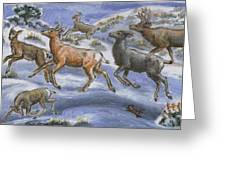 Mule Deer Surprise Greeting Card