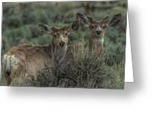 Mule Deer Visitors At Sunset Greeting Card