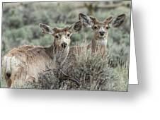 Mule Deer Visitors Greeting Card