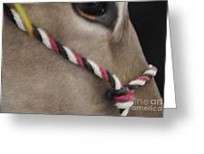 Mule Eye Greeting Card