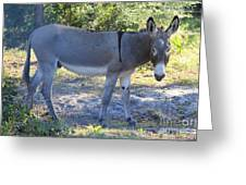 Mule In The Pasture Greeting Card