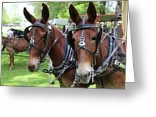 Mules 6 Greeting Card