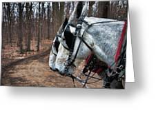 Mules At Sugar Camp Greeting Card