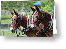 Mules Day 2016 Greeting Card