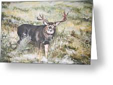 Muley Greeting Card