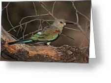 Mulga Parrot Female A Greeting Card