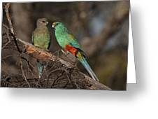 Mulga Parrot Pair Greeting Card