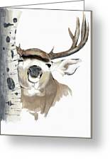 Mulie Buck And Aspen Greeting Card
