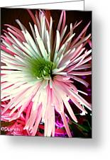 Multi Color Aster Greeting Card