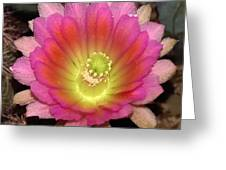 Multi Color Flower Greeting Card