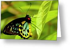 Multi Colored Buttrfly Greeting Card