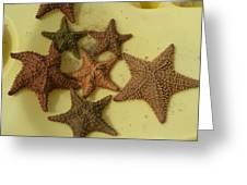 Multi-colored Star Fish On The Sand Greeting Card