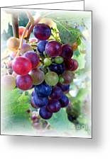 Multicolor Grapes Greeting Card