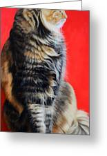 Multicolored Cat In Red Background  Greeting Card