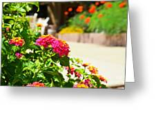 Multicolored Flowers Greeting Card