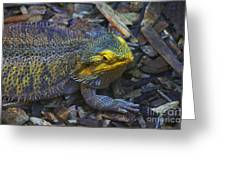 Multicolored Lizard Greeting Card