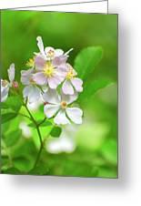 Multiflora Rose Greeting Card