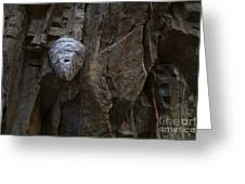 Mummy Head Greeting Card by Barbara Schultheis