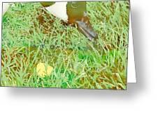 Munching On Green Grass Greeting Card