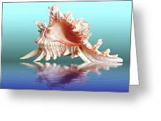 Murex Seashell Reflection Greeting Card