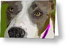 Murphy -- The Closeup Greeting Card