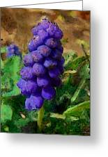 Muscari  Greeting Card