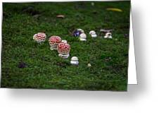Muscaria Migration Greeting Card