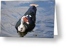 Muscovy 16-07 Greeting Card