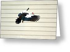 Muscovy Duck In Flight Passing A Building Greeting Card