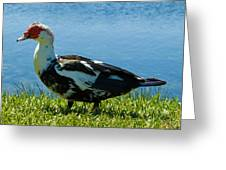 Muscovy Ducks Are Butt-ugly Greeting Card
