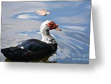Muscovy Magic 2 Greeting Card