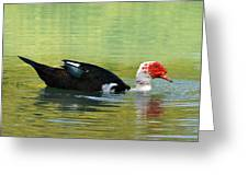 Muscovy Red Greeting Card